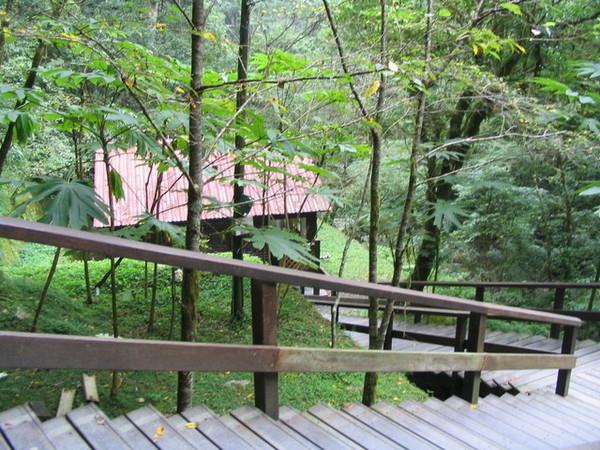森林中的小屋