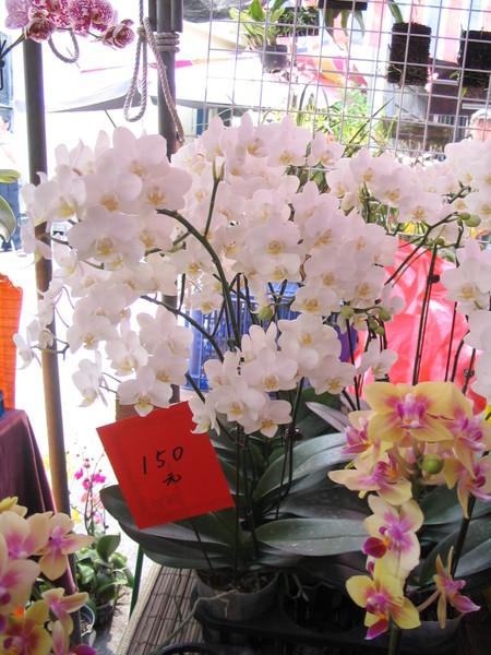 蘭花估價王2