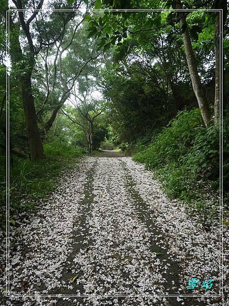 寶山 迴龍步道 A04