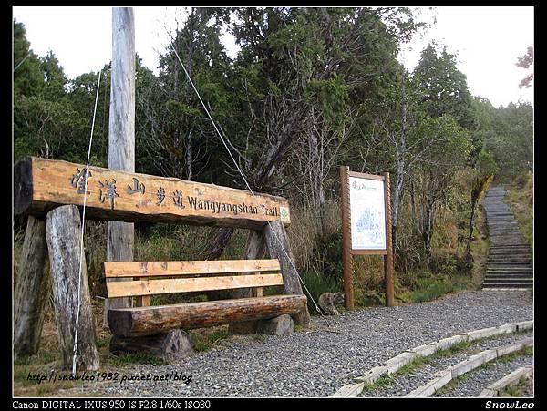 望洋山步道 13