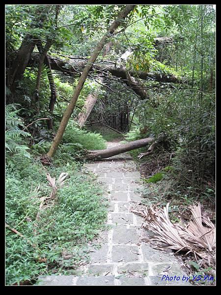 箭竹步道 01