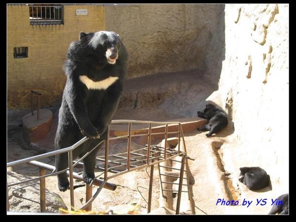 八達嶺長城-熊出沒