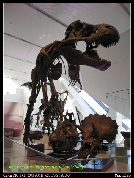 恐龍耶 這隻跟博物館驚魂夜的很像喔