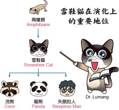 05雪鞋貓在演化上的地位