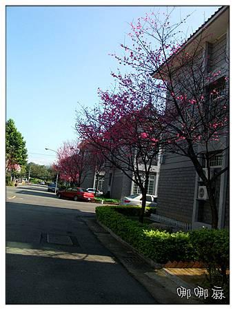 櫻花社區3
