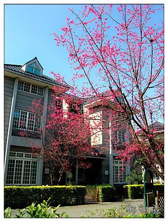 櫻花社區2