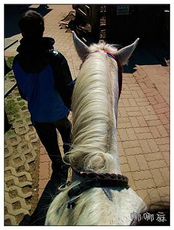 馬背往下看
