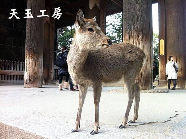 鹿男 14