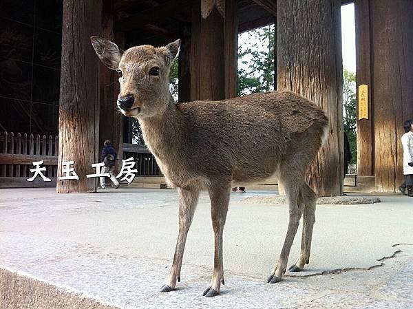 鹿男 13