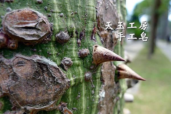 美人樹 2