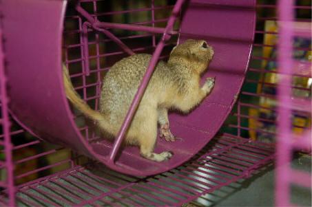 squirrel cage