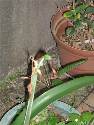 plant050.jpg