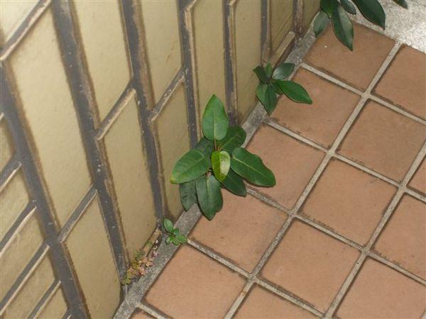 plant061.JPG