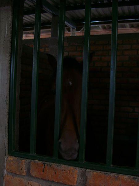 馬界的郭富城
