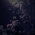 C360_2013-01-24-19-16-36