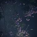 C360_2013-01-24-19-18-02