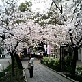 美麗的步道