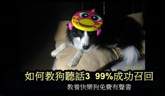 如何教狗聽話3 99%成功召回.jpg
