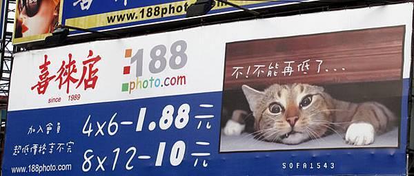 台中.照相館店猫.99年11月10日
