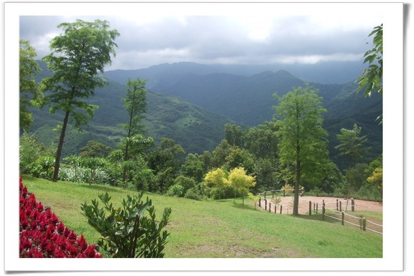 20080630 復興鄉 綠光森林-11.jpg
