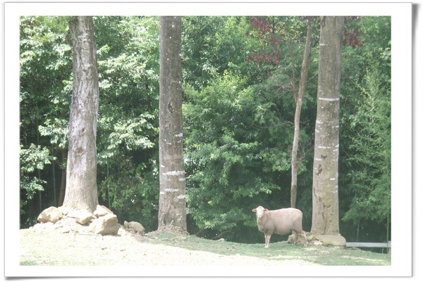 20080630 復興鄉 綠光森林-16.jpg