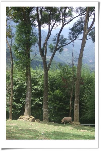20080630 復興鄉 綠光森林-17.jpg