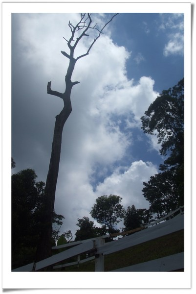 20080630 復興鄉 綠光森林-21.jpg