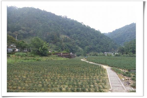 20091108 [坪林] 金瓜寮-8.jpg