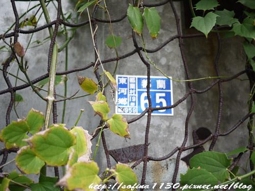 P1170321.jpg