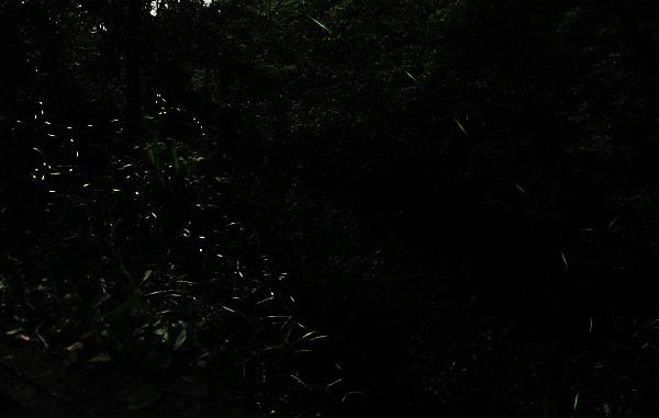 IMG_9622.JPG