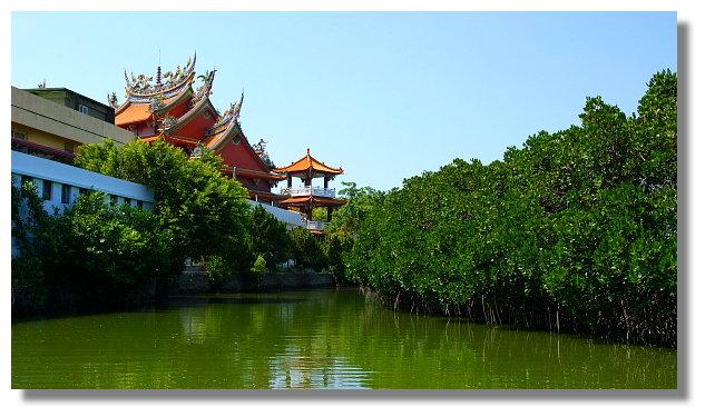 台南四草紅樹林綠色隧道