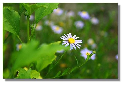 民宿種的花