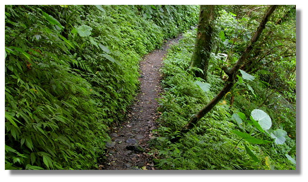 往雲森瀑布的山路