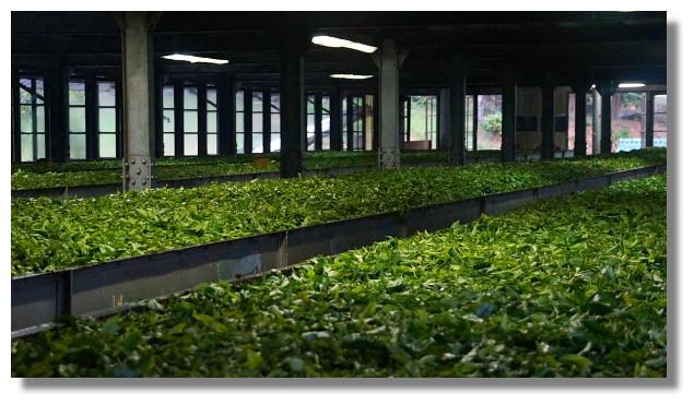 Nuwara Eliya努瓦拉艾莉亞製茶工廠