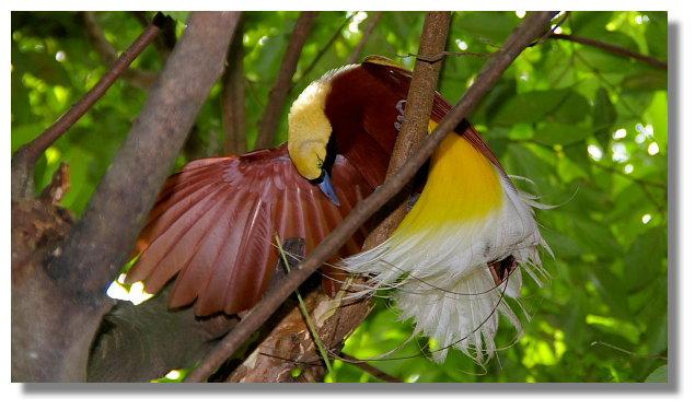 新竹綠世界生態農場天堂鳥