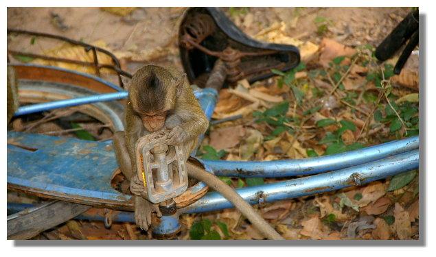 吳哥寺外的猴子