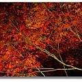 京都清水寺夜楓