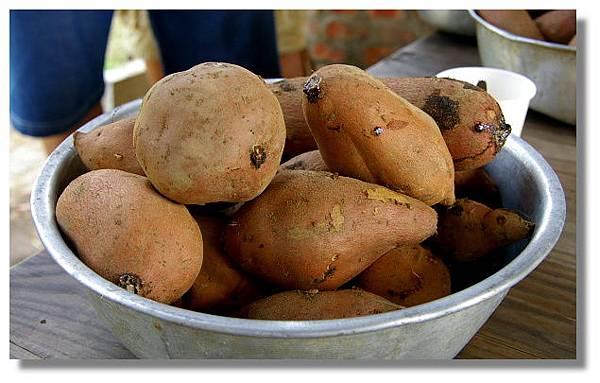 好望角蕃薯園內烤蕃薯