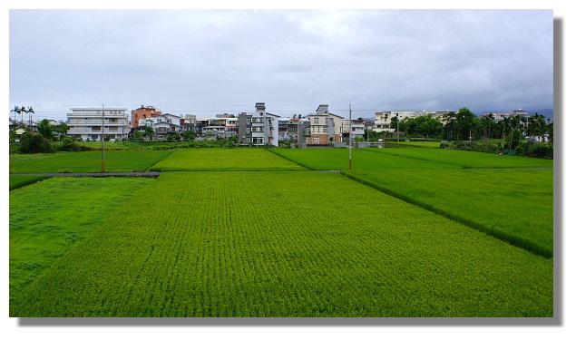 宜蘭羅東稻田景觀