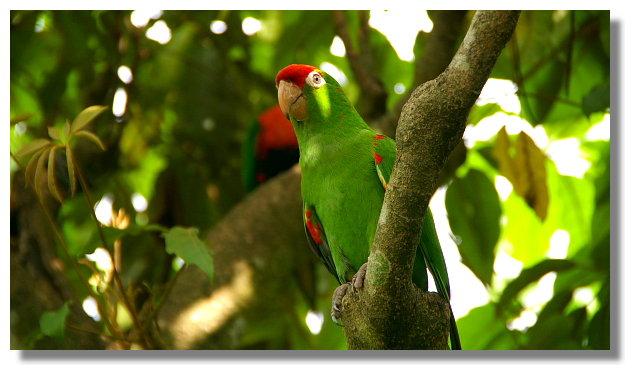 新竹綠世界生態農場紅額太陽鸚鵡