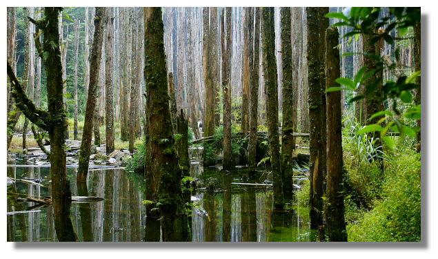 南投忘憂森林