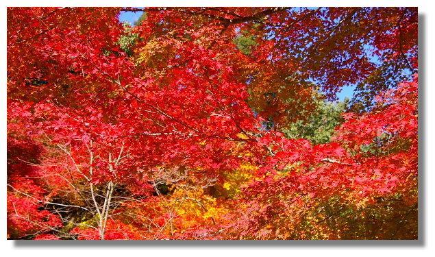 京都嵐山公園龜山地區