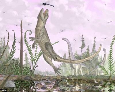 貓鱷魚 化石1.jpg