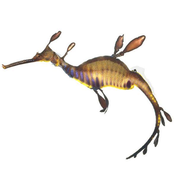 全球十大罕見怪異物種4.jpg