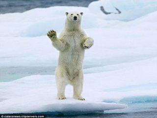 好客 北極熊 - 超級好客的北極熊1.jpg