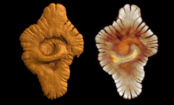 八大珍貴化石:史前巨蟒可吞食恐龍07.jpg