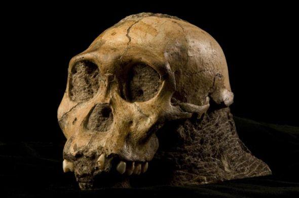 八大珍貴化石:史前巨蟒可吞食恐龍05.jpg