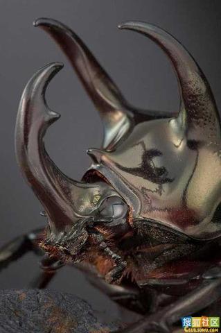酷似外星生物的動物08.jpg