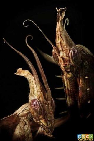 酷似外星生物的動物02.jpg