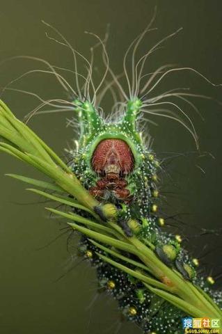 酷似外星生物的動物06.jpg